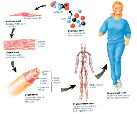 Every cell must keep itself in homeostasis in order to ...