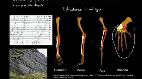 Evidencias de la evolución | Biología | Khan Academy en ...