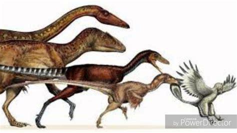 Evolución de las Aves   YouTube