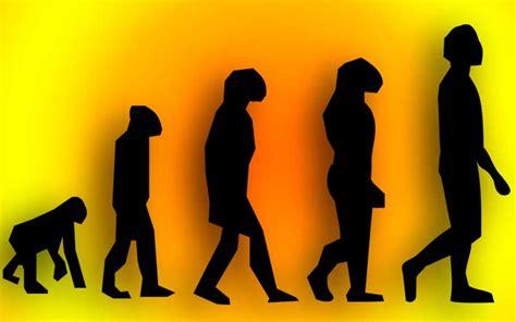 Evolución del Ser Humano   BioEnciclopedia