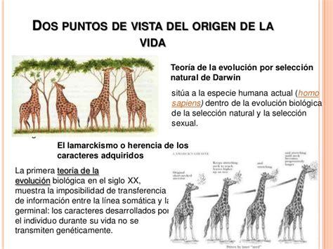 evolucion del ser humano  origen de la vida