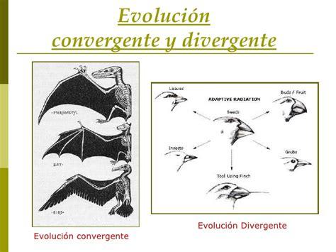 EVOLUCIÓN: Evolución convergente.  Rubén Montoya