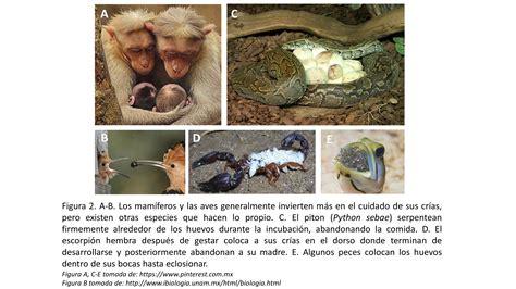 Evolución: Visión general de la biología evolutiva en la ...