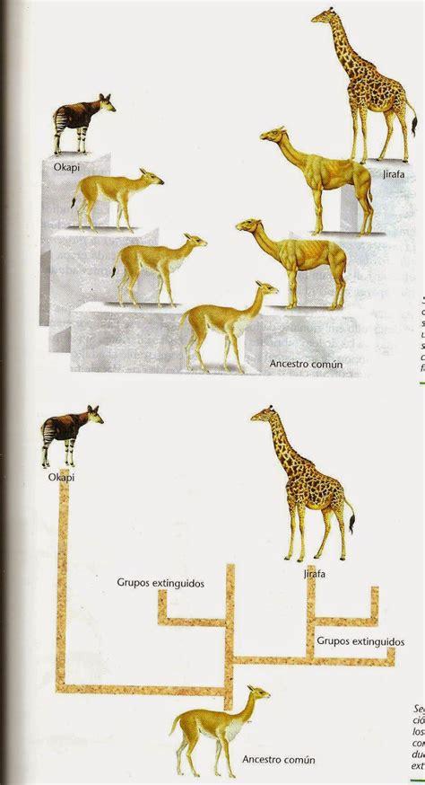 EVOLUCIÓN Y GEOCRONOLOGÍA: LAS TEORÍAS EVOLUCIONISTAS