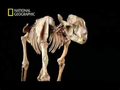 Evoluciones 4 de 4; Necesidades de osos 2008 Documental ...