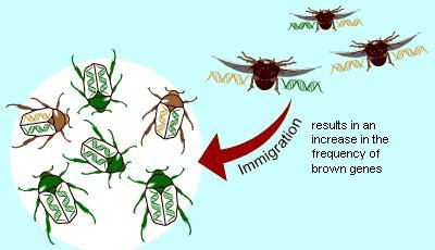 Evolution 101: Microevolution