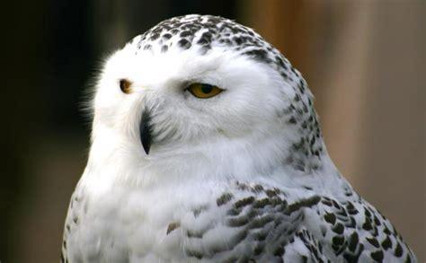 Exhibiciones de aves rapaces   Turismo Responsable