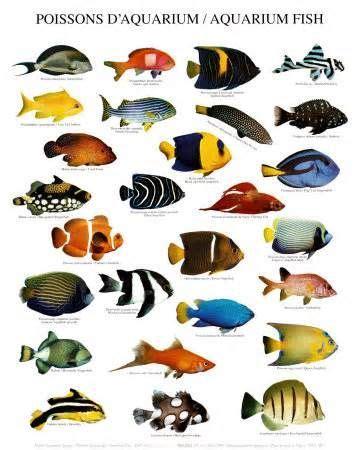 Existen muchos tipos de peces?   preguntas y respuestas ...