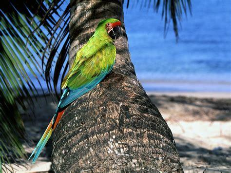 Exotic Birds Pics: Exotic Birds Pics