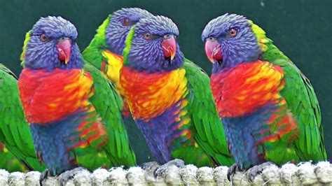 Exotic Birds   We Need Fun
