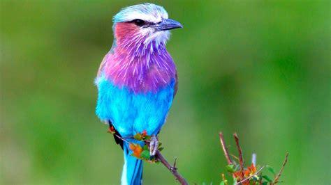 Exotic Birds | WeNeedFun