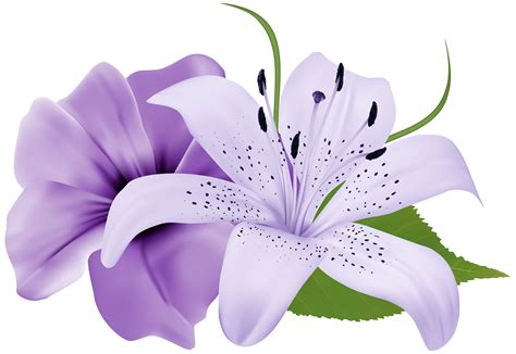 exotic flower clip art   Clipground