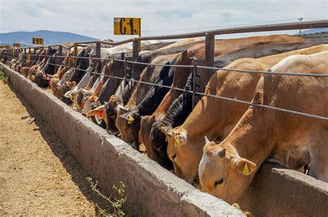 Exportación de ganado bovino de México a Estados Unidos ...