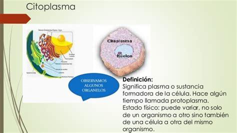 Exposicion Citoplasma y espacio interciliar