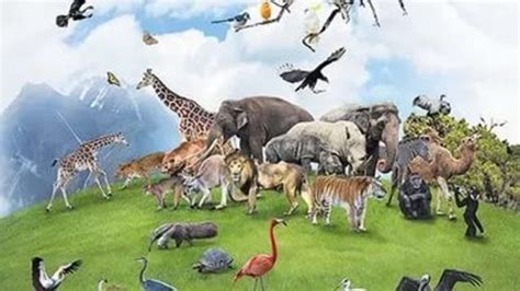 extinct animals timeline | Timetoast timelines