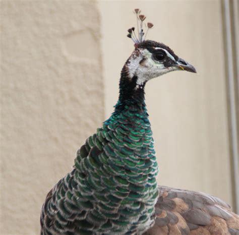 ExtraDay: Flamenco Bird