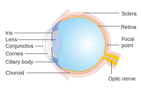 Eye Facts | Cool Kid Facts