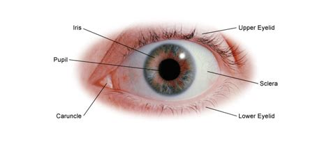 Eye Health: General Information | Center for Young Women s ...