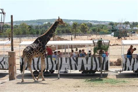 Fantastic place   Safari Zoo, Porto Cristo Traveller ...