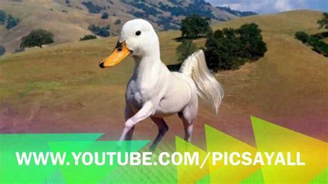 Fantasy animals created using photoshop   YouTube
