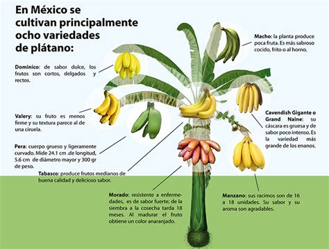 farming | Geo Mexico, the geography of Mexico   Part 2