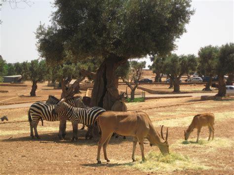 Fasano, Savelletri e lo Zoo Safari   Nei Dintorni   Trullo ...