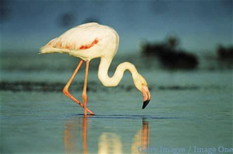 Fauna Ameaçada   Cores em Extinção