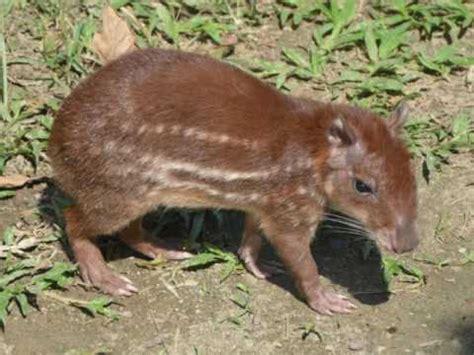 Fauna de la amazonia Ecuador 2016   YouTube