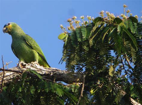 Fauna de la selva amazónica del ecuador – Selva Amazónica ...