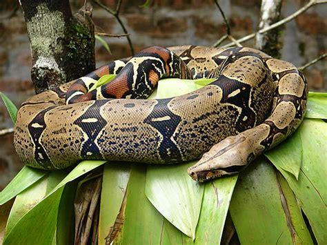 Fauna de la selva humeda | Tipos de selvas