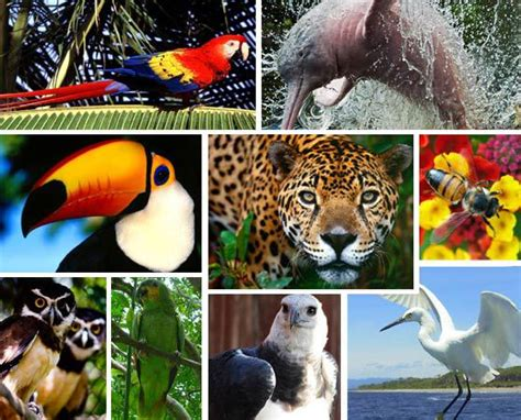 Fauna del Amazonas   EducaAmazonass