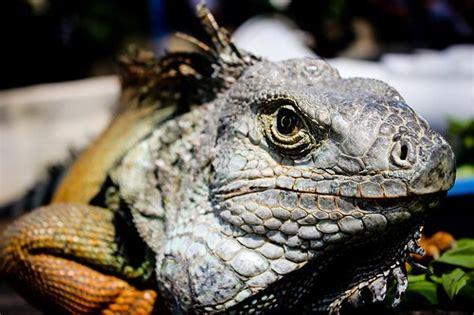 Fauna del Amazonas — Mis animales