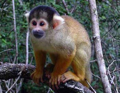 Fauna, flora amazonia : peces, pirañas, delfin, anaconda