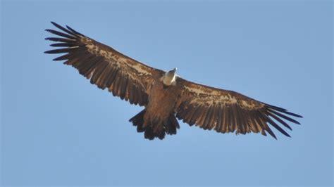 Fauna Ibérica: Aves