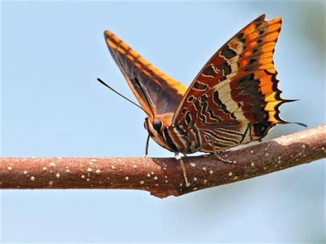 Fauna   Macchia Mediterranea