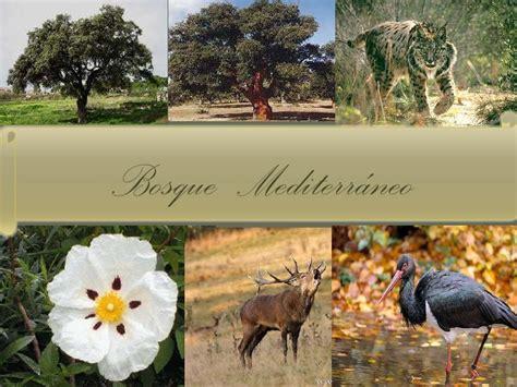 Fauna mediterránea y cantábrica