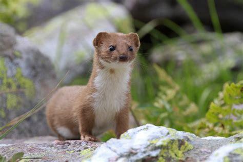 Fauna pugliese, tra gli animali anche volpi e vipere ...