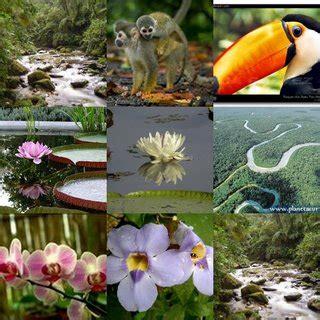 fauna – ECUADOR Y SUS REGIONES NATURALES