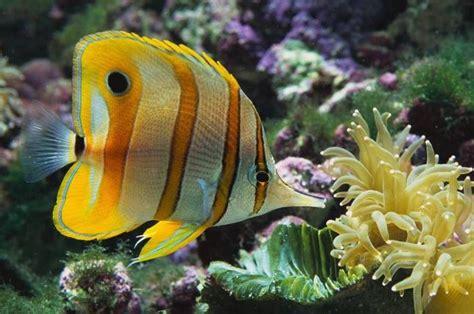 Feeding Tropical Fish   Aquarium Adviser