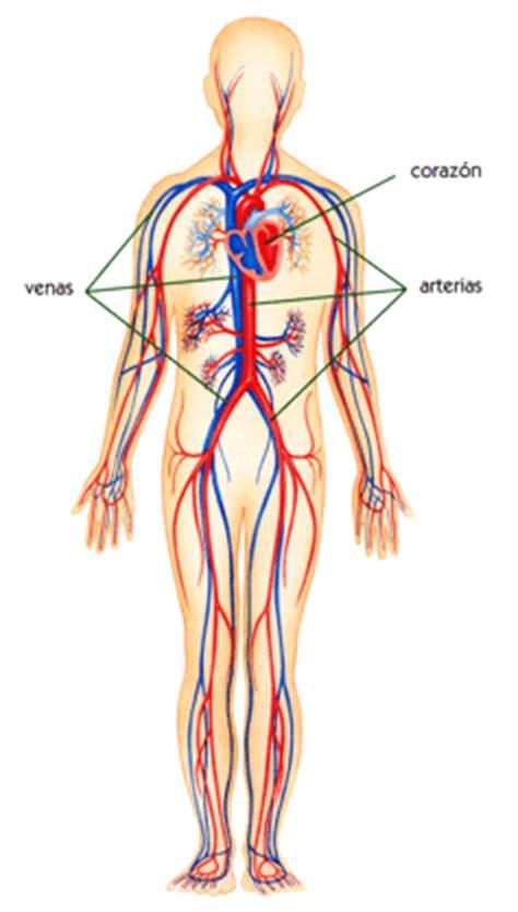 Feria Científica Secmyl : Sistema Circulatorio