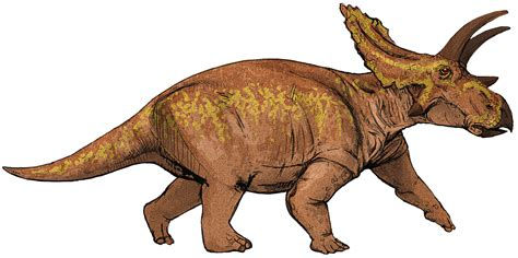File:Anchiceratops dinosaur.png   Wikimedia Commons