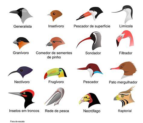 File:Bicos de aves horizontal.jpg   Wikimedia Commons