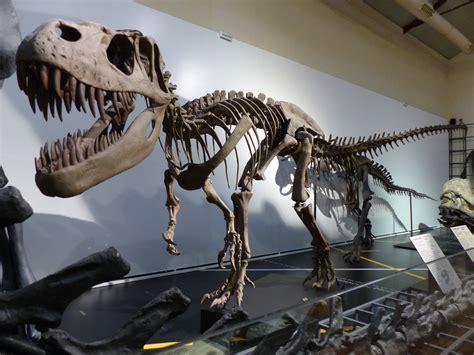 File:Dinosaurios en el Museo Nacional de Ciencias ...