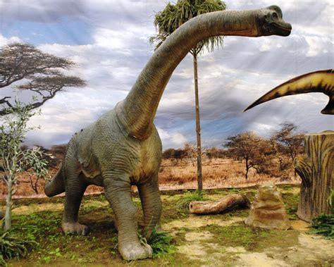 File:Dinosaurios Park, Brachiosaurus young.JPG   Wikimedia ...
