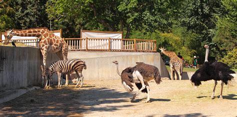 File:Madrid Zoo.jpg   Wikimedia Commons