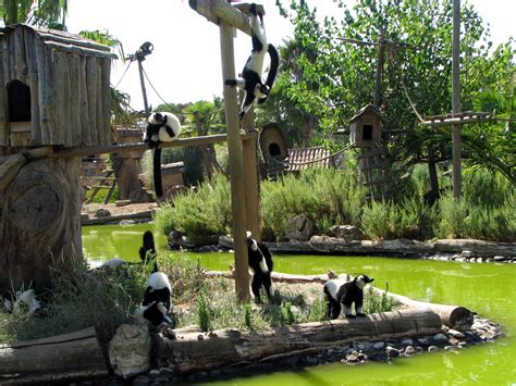 File:Monkey Island   Lagos Zoo   The Algarve, Portugal ...