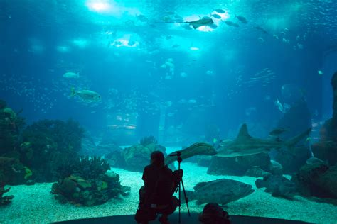 File:Oceanario de Lisboa  5579908953 .jpg