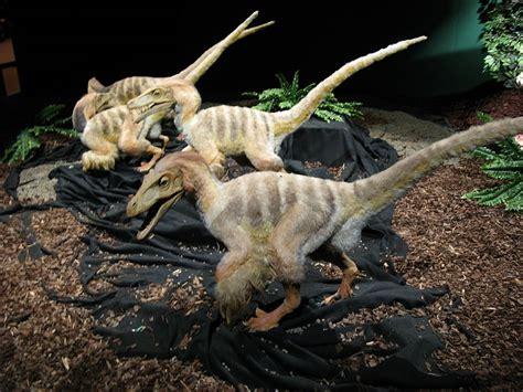 File:Velociraptor models.jpg   Wikipedia
