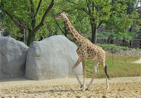 File:Zoo de Vincennes, Paris, France April 2014  7 .jpg ...