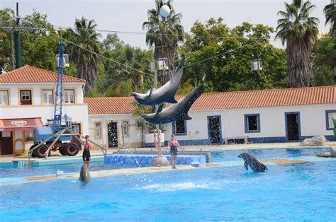 File:Zoo Lisboa   Golfinhos  2 .JPG
